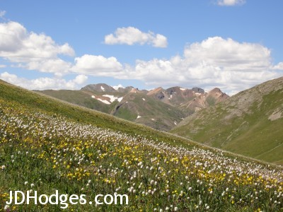 Mountains and wildflowers diagonal