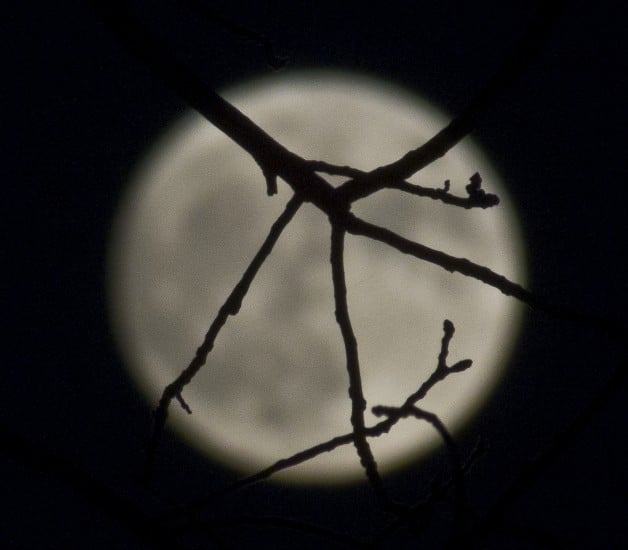 Supermoon silhouette and branches